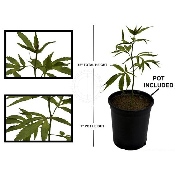 Marijuana Plant - Simulated Training Aid